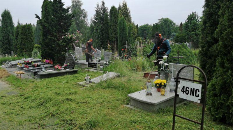 koszenie cmentarz