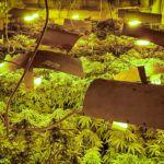 Wyjątkowe odkrycie opolskiego CBŚP! Plantacja marihuany pod ziemią