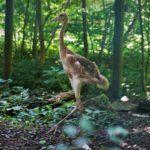 Nowy mieszkaniec opolskiego zoo. To żuraw mandżurski