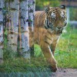 Opolskie zoo - idealne miejsce na jesienny wypad